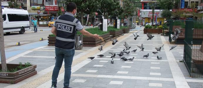 DEVREK POLİS VE GÜVERCİNLERE KALDI